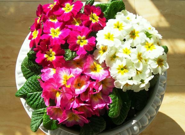 苏州办公写字楼绿植租摆、园林绿化、花卉租摆、优惠多