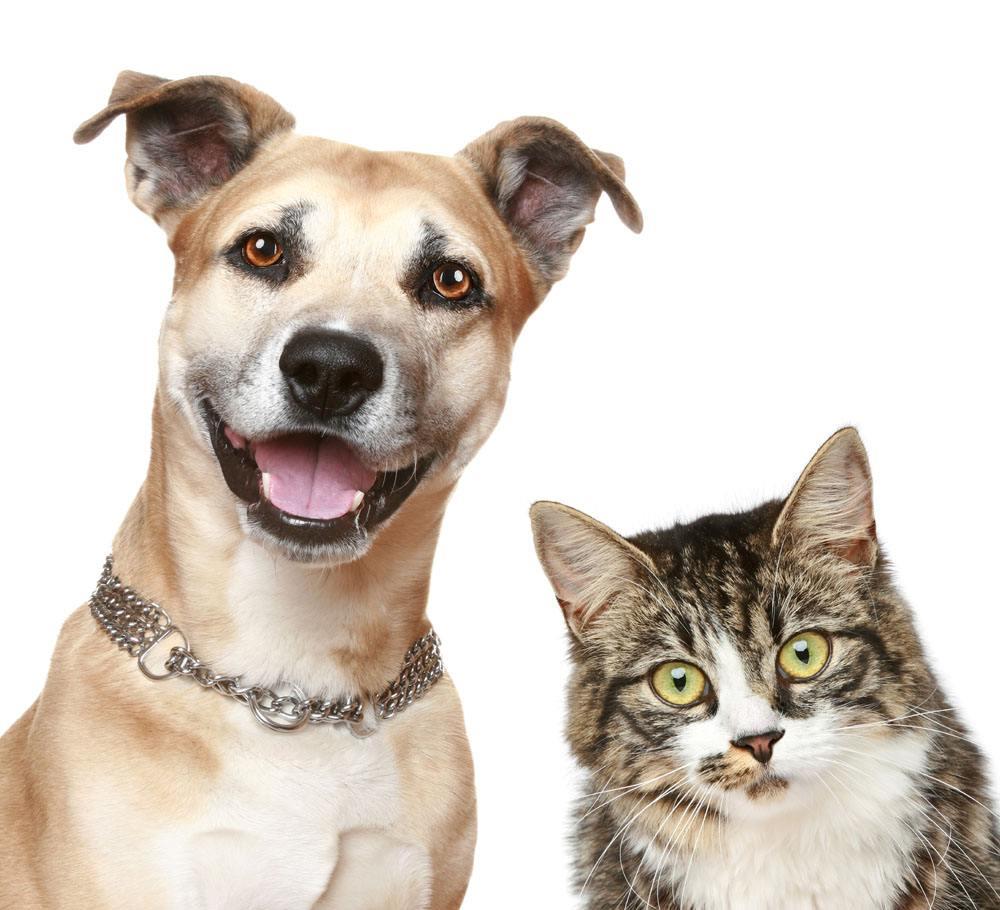 上门喂猫喂狗,上门铲屎,宠物寄养