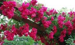 全苏州绿植盆景租摆、办公室、写字楼植物盆栽鲜花租赁