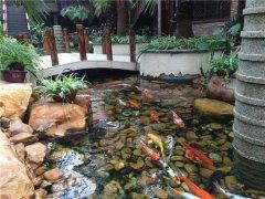 别墅景观鱼渔场直供